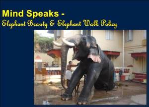 Mind Speaks - Elephant Beauty and Elephant Walk Policy