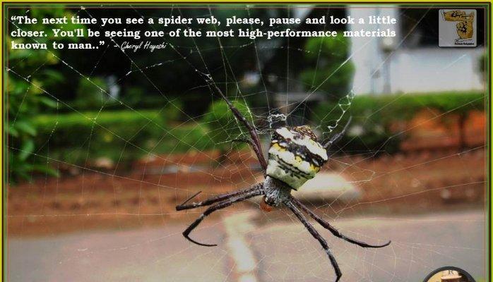 19 October 2015 - Photo Speaks - Spiders Web.jpg