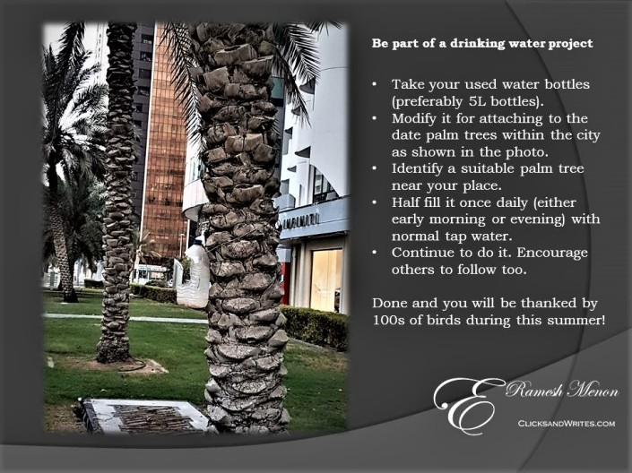 Drinking water project for birds